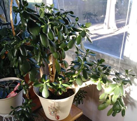 An Amazing plant